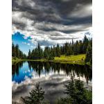 预订 Journal: Forest Reflections Notebook Journal 8.5 X 11 20