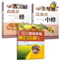 养蜂技术书籍全3册 图说蜜蜂养殖关键技术+高效养蜂+高效养中蜂 蜜蜂饲养 蜜蜂良种繁殖 蜂病防治 蜂蜜产品生产 管理