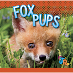 预订 Fox Pups [ISBN:9781644660942]