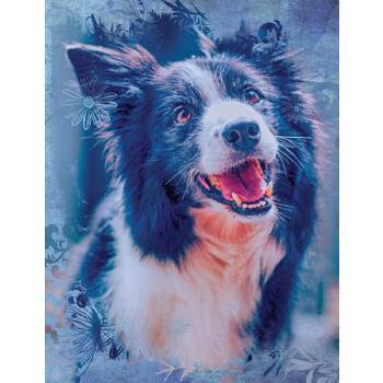 预订 Cute Border Collie Dog Composition Notebook, Graph Paper: 4x4 Quad Rule  [ISBN:9781720601364] 美国发货无法退货 约五到八周到货