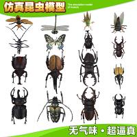 儿童早教益智玩具 3d仿真昆虫世界玩具模型甲虫动物塑胶模型昆虫教具