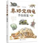 养好宠物龟手绘图鉴
