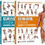 MC现货 肌肉力量训练彩色图谱书+拉伸训练彩色图谱 科学运动健身肌肉腹肌锻炼健美训练书 无器械健身教程大全 健身健美塑