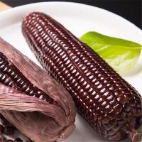 【山西特产】 原生态黑糯玉, 非转基因玉米, 真空包装 5根限量试吃装,包邮到家