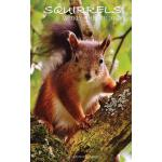 预订 Squirrels Weekly Planner 2017: 16 Month Calendar [ISBN:9