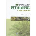 野生仙湖苏铁――植物界的大熊猫