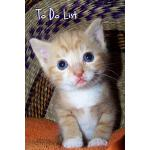 预订 To Do List: Kitten 9x6 [ISBN:9781503052772]