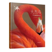 动物小百科:火烈鸟