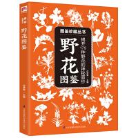 野花图鉴:揭开179种野花的神秘面纱