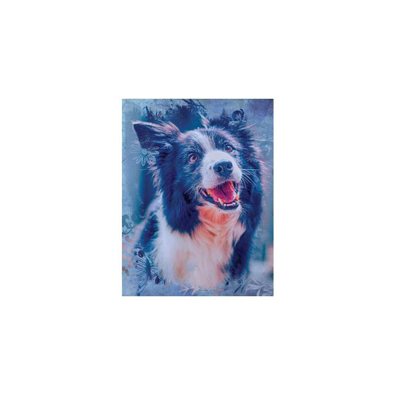 预订 Cute Border Collie Dog Composition Notebook, College Ruled: Lined Studen [ISBN:9781720601357] 美国发货无法退货 约五到八周到货