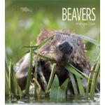 预订 Living Wild: Beavers [ISBN:9781628320008]