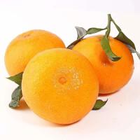 【包邮】湖南永兴冰糖橙5斤装 果径50-65mm