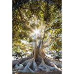 预订 Root Tree Photo Journal [ISBN:9781729340950]