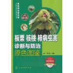 果树病虫害诊断与防治原色图鉴丛书--板栗、核桃、柿病虫害诊断与防治原色图鉴
