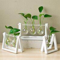 水培花瓶创意个性绿萝植物玻璃容器现代小清新办公桌面装饰品摆件