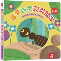 最美自然洞洞绘本-蚂蚁