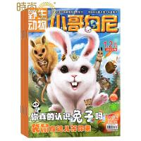 小哥白尼野生动物画报杂志2020年全年杂志订阅4月起订一年共12期中小学生课外阅读 少年儿童科普期刊杂志