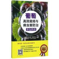 葡萄高效栽培与病虫害防治彩色图谱