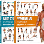 肌肉力量训练彩色图谱书+拉伸训练彩色图谱 科学运动健身肌肉腹肌锻炼健美训练书 无器械健身教程大全 健身健美塑形减脂书籍