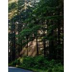 预订 Journal: Forest Road Notebook Journal 8.5 X 11 202 Lined