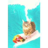 预订 Kitty Cat Surfing Burrito Daily Weekly Planner [ISBN:978