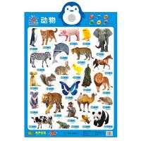 阳光宝贝 新版有声挂图:动物