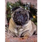 预订 Cute Pug Dog Composition Notebook, Wide Ruled: Lined Stu