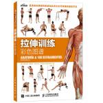 拉伸训练彩色图谱 100种拉伸练习 远离肌肉损伤 快速有效改善身体柔韧性 肌肉健美训练图解拉伸训练书籍 健身书籍练肌肉